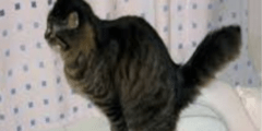 تعليم القطط الذهاب الى المرحاض