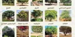 الاشجار المناسبة لزراعتها في الخليج في حدائق واسوار المنازل