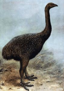 212x300 - أغرب 10 حيوانات انقرضت بمرور الزمن