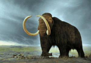 2 300x209 - أغرب 10 حيوانات انقرضت بمرور الزمن