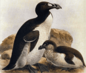 1 300x256 - أغرب 10 حيوانات انقرضت بمرور الزمن