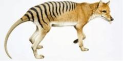 أغرب 10 حيوانات انقرضت بمرور الزمن