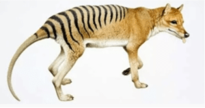 300x159 - أغرب 10 حيوانات انقرضت بمرور الزمن
