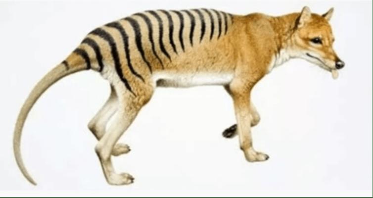 حيوانات منقرضة ... إكتشف أغرب 10 حيوانات انقرضت بمرور الزمن