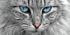 كيف تعرف ما تفكر فيه القطط