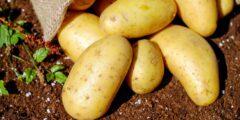 فوائد البطاطس للجسم.. أسباب كثيرة تجعلنا نتناولها أهمها الوجه والشعر