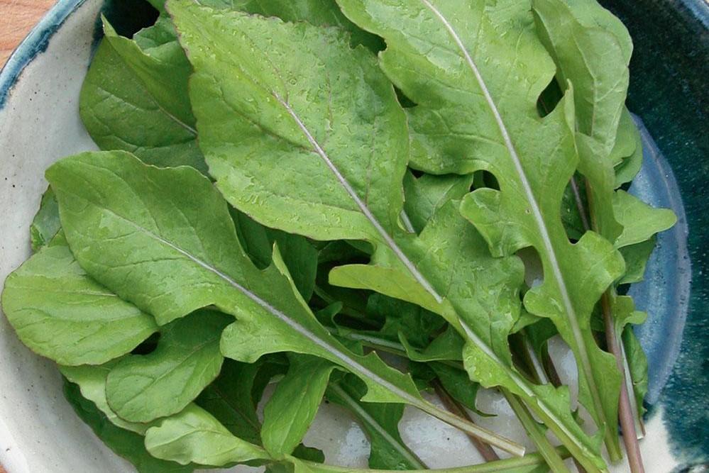 فوائد الجرجير للجسم والبشرة..أهم الخضروات الغنية بالفيتامينات والمعادن