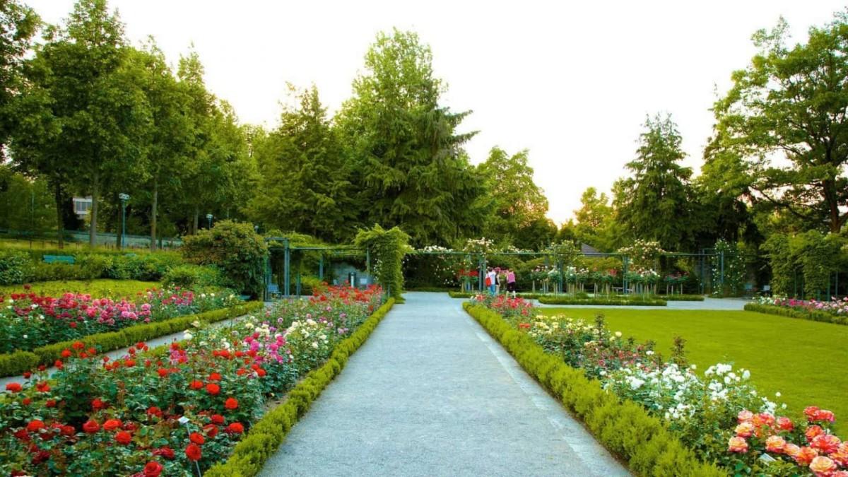 جولة في حديقة زيوريخ النباتية القديمة