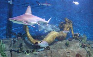 حورية البحر 300x183 - أبرز الأنشطة السياحية والرفيهية في أكورايوم سي لايف ميلبورن