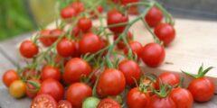 فوائد عصير الطماطم المذهلة.. يغذي البشرة ويحافظ على الصحة من الأمراض