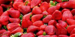 فوائد الفراولة الصحية.. فاكهة بطعمٍ شهي ومفيدة للجسم
