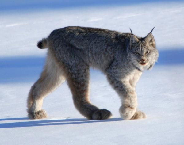 الحيوانات القطبية المفترسة