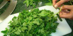 فوائد الملوخية للصحة.. أسباب تجعلك تحب أشهر الأكلات المصرية