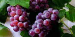 فوائد العنب الصحية.. إليك أهم الأسباب التي تجعلك تفضل أكله