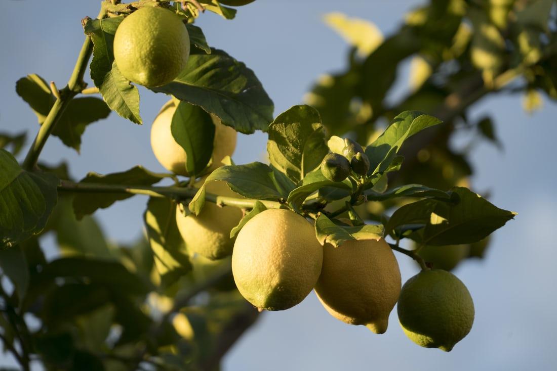 photo 1605185189315 fc269c231e41 - فوائد الليمون لتقوية المناعة