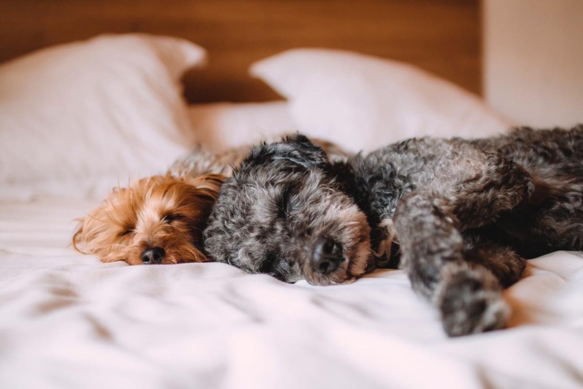 إلى مدربي الكلاب كل ما يتعلق بفيروس البارفو في الكلاب