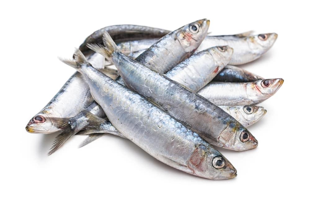 فوائد سمك السردين المذهلة.. إليك 11 فائدة صحية ورائعة للجسم