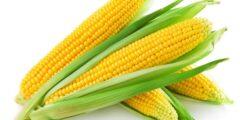 فوائد الذرة الصحية.. إليك 12 سببًا يبين مدى فائدته للجسم.