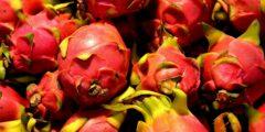dragon fruit 84719 1920 240x120 - فوائد فاكهة التنين