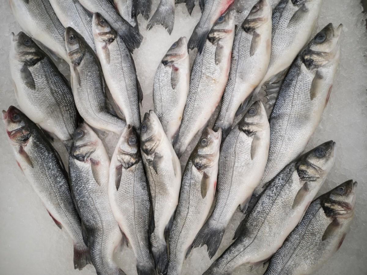 فوائد الأسماك الصحية