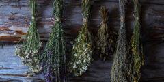 علاج السمنة بالأعشاب الطبيعية