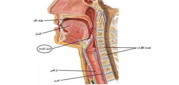 انتبهوا جيداً إلى أهم أعراض التهاب لسان المزمار