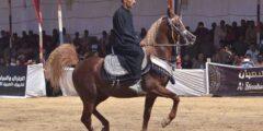 سباقات الخيول المفضلة للكثير