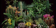 مملكة النباتات في الغابة