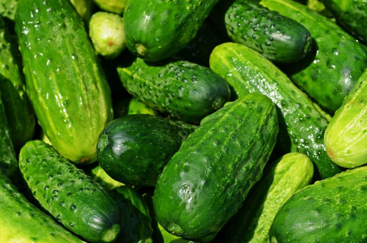 cucumbers 849269 1920 - ماذا تعرف عن الخيار (فوائد سوف تدهشك)