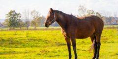 هل تعلم كيفية تربية الخيول بشكل سليم؟!