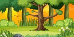هل تساءلت يوماً كيف تتنفس الأشجار ؟!